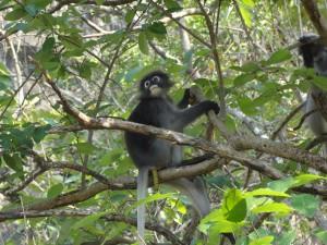 04.02.2013: Was kommt denn da unten aus dem Affen raus?!