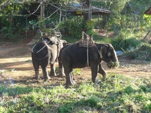 Elefanten am Wegesrand